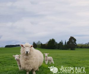 THE Sheep's Back Ad Campaign Image