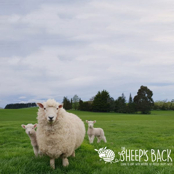 THE Sheep's Back Ad Campaign Featured Project